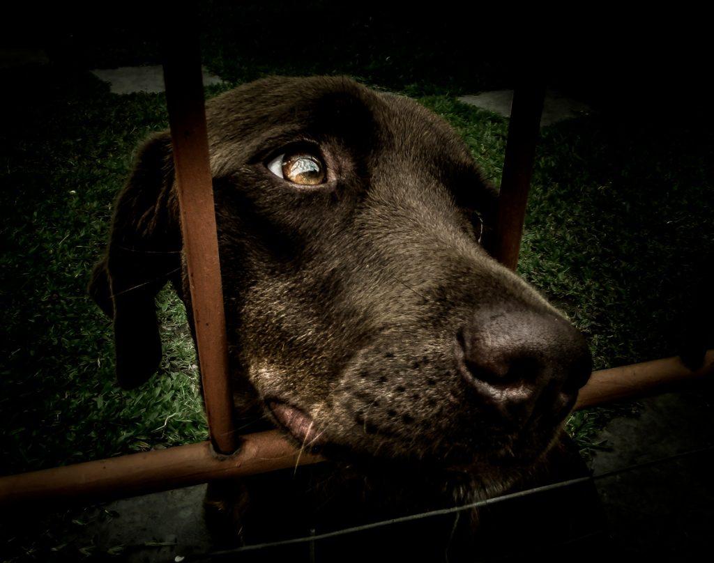 Adopción animales